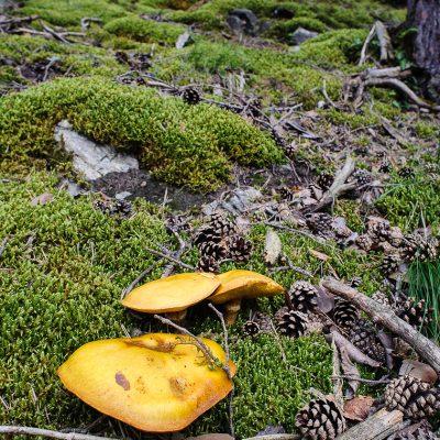 Waldboden / Forrest Floor