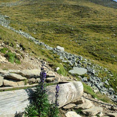 Tränke am Ochsenbühel mit dem Aufstieg zur Vermoispitze (2.930m) im Hintergrund