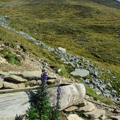 Vermoispitze (2.930m) im Hintergrund