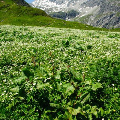 Frühsommerliche Alpenlandschaft im Brandnertal, AT. Alpine scenery in the Brandner Valley, AT